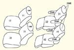 200系特別架装車 (H23/3〜H24/4)1〜2列目用 セット内容イメージ図